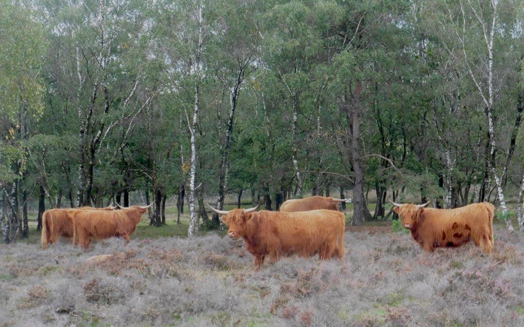 In begraasde natuurgebieden in Gelderland zijn 34 verschillende bestrijdingsmiddelen gevonden